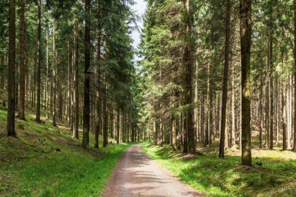 Castlewood Hotels Thüringer Wald