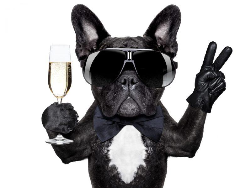 Castlewood Hotels Dog cool Luxus