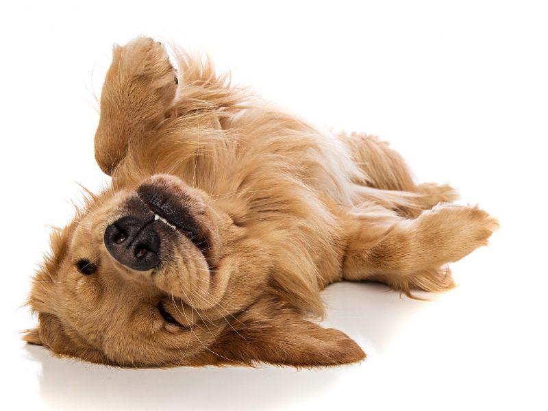 Castlewood Hotels Hund