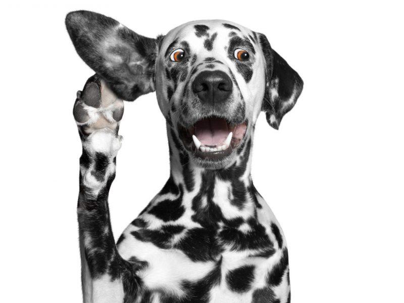 Castlewood Hotels Hunde Package